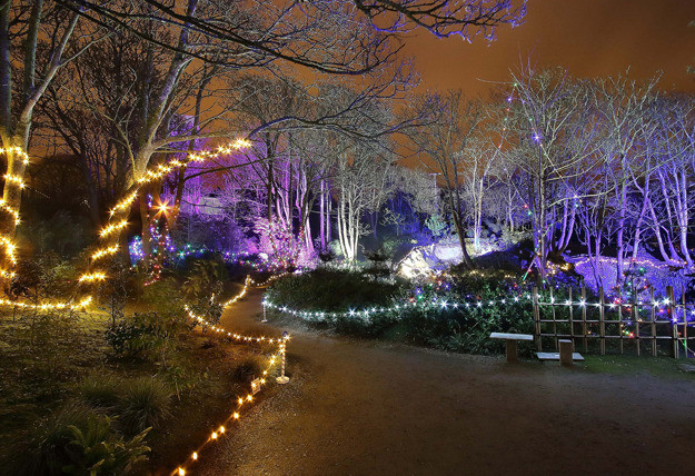 Things to do in County Waterford, Ireland - Enchanted Garden Winter Light Festival - YourDaysOut