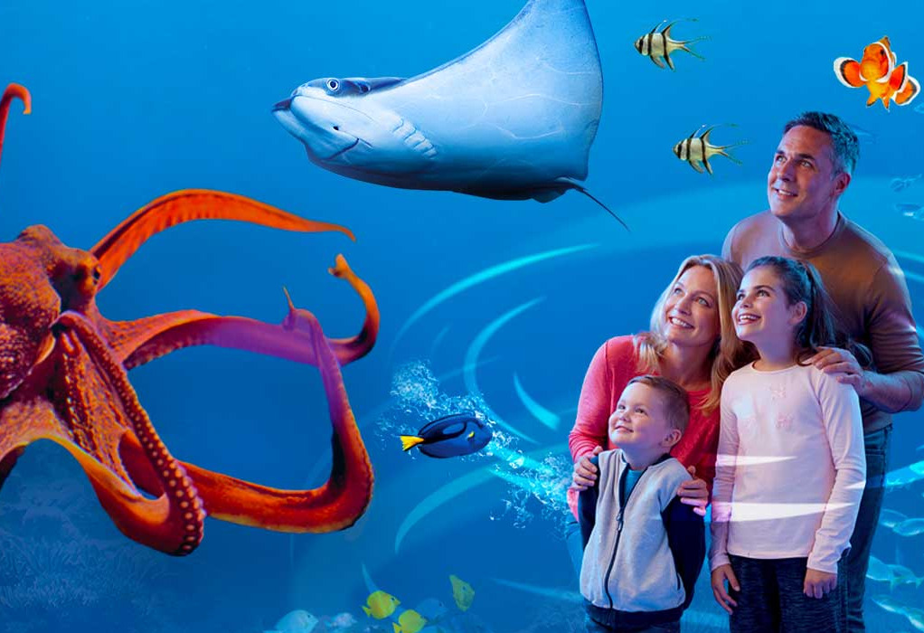 Things to do in County Wicklow, Ireland - SEA LIFE, Bray - YourDaysOut