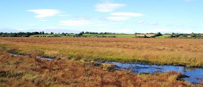 Things to do in County Offaly, Ireland - Clara Bog Nature Reserve - YourDaysOut