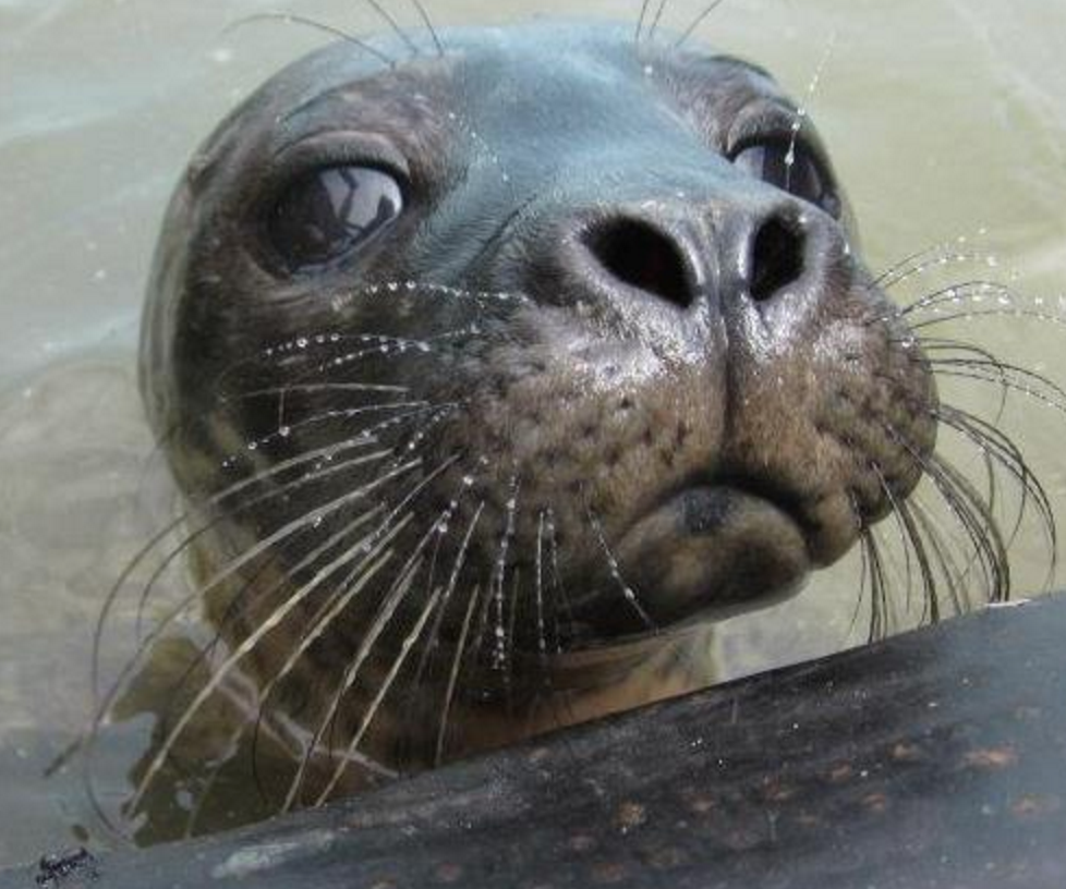 Things to do in County Wexford, Ireland - Seal Rescue Ireland - YourDaysOut