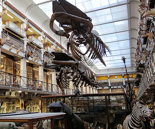 National Museum of Ireland | Natural History - YourDaysOut