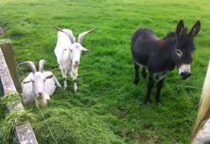 Things to do in County Kildare Naas, Ireland - Caragh Open Farm - YourDaysOut