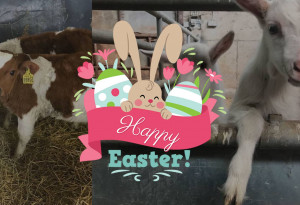 Their annual Easter Treasure Hunt at Red Mountain Open Farm is exclusively on Saturday the 20th of April, Sunday the 21st of April and Monday the 22nd of April. - YourDaysOut