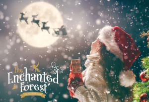 Things to do in County Meath, Ireland - Visit Santa at The Enchanted Forest Slane - YourDaysOut