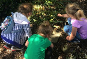 Things to do in County Dublin, Ireland - Biodiversity Explorers Workshop for Children - YourDaysOut