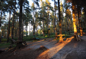 Things to do in County Roscommon, Ireland - Zipit Forest Adventures, Roscommon - YourDaysOut