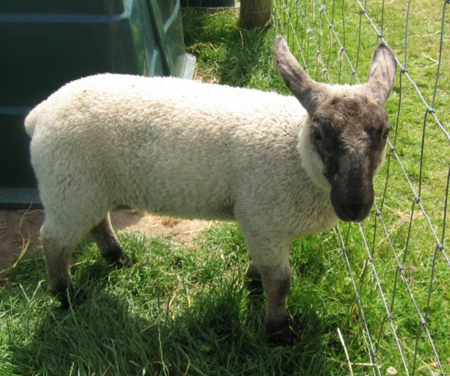 Things to do in County Wicklow, Ireland - Glenroe Open Pet Farm - YourDaysOut