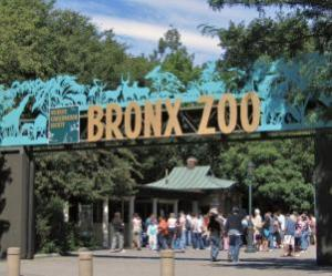 Things to do in New York, United States - Bronx Zoo - YourDaysOut